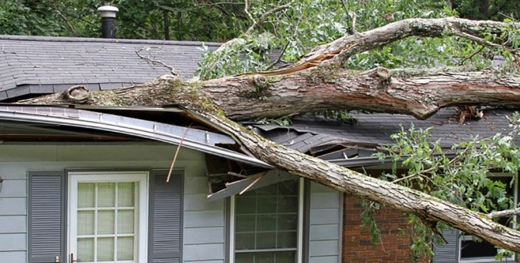 House damaged by fallen tree